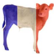La France bascule dans «l'administrativisme castriste»